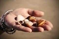 Dando seashells Fotografia de Stock Royalty Free