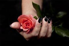 Dando uma flor apenas para você foto de stock