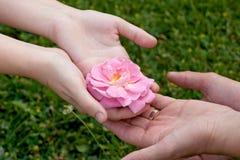 Dando uma rosa Imagem de Stock Royalty Free