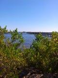Dando una occhiata attraverso le mangrovie Fotografie Stock
