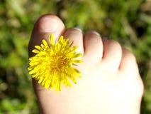 dandy пальцы ноги стоковая фотография