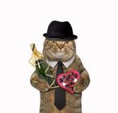 Dandy de chat avec le champagne et la sucrerie Image stock