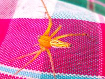 Danger spider. Animal standing on colourful fabrics Stock Images