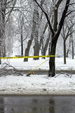 Danger branches falling Stock Image