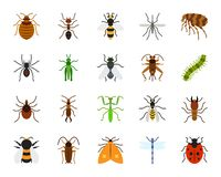 Danger Insect simple flat color icons vector set. Danger Insect flat icons set. Sign kit of bed bug. Beetle pictogram collection includes dragonfly, fly, spider stock illustration