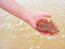 Danger jellyfish medusa in hand royalty free stock image