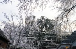 Danger of losing electricity - icicles on the electric lines and tree branches between two houses during an ice storm. Danger of losing electricity - icicles Stock Image