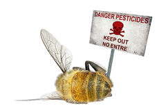 Danger pesticides. Dead honey bee and the danger warning poster (Danger pesticides) isolated on the white background Royalty Free Stock Photography