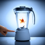 Danger situation - fear of fatal destiny. Goldfish in a mixer Royalty Free Stock Photography