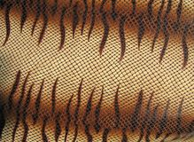 Danger snakeskin, python closeup texture Royalty Free Stock Photo