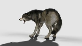 Danger wolf animal. Brown and Gray wolf. 3d Illustration danger wolf animal. Brown and Gray wolf, Canis lupus. Wild dog in the nature Stock Photo