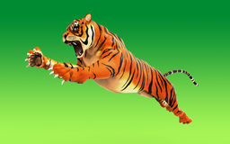 Dangerous Bengal Tiger roaring and jumping isolated Stock Image