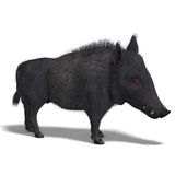 Dangerous black boar is stiff-bristled. 3D rendering of a dangerous black boar is stiff-bristled with clipping path and shadow over white Royalty Free Stock Photography