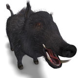 Dangerous black boar is stiff-bristled Royalty Free Stock Photo