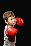 Dangerous boxer Stock Photography