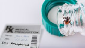 Castor bean tick, laboratory tube and medical prescription. Ixodes ricinus. The dangerous carrier of infectious encephalitis on the detail of glass vial in a royalty free stock photography