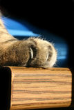 Dangerous cat claws. Close-up of tabby cat paw with claws Royalty Free Stock Photography