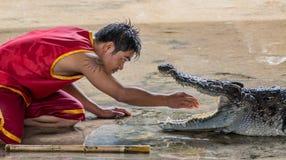 Free Dangerous Crocodile Show Stock Photo - 44533150