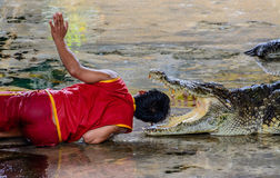 Dangerous crocodile show Stock Photos