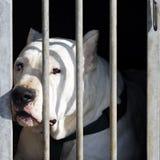 Dangerous dog Royalty Free Stock Photos