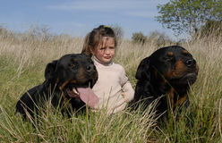 Dangerous dogs and child. Little girl and two dangerous purebred rottweiler Stock Images