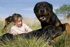 Dangerous dogs and child Royalty Free Stock Image