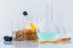 Dangerous food from  laboratory agricultural grains and corn wit Royalty Free Stock Photos