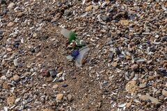 Free Dangerous Glass Fragments From Broken Bottles On The Coast Of The Sea. Glass Dangerous Trash On The Beach Royalty Free Stock Image - 183551356