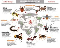 Dangerous insects and their habitat color infographics. Dangerous insects and their habitat infographics Stock Photography