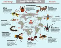 Dangerous insects and their habitat color infographics. Dangerous insects and their habitat infographics Royalty Free Stock Photos