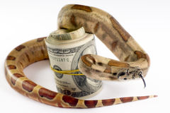 Dangerous money. Stock Photo