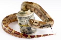 Dangerous money. stock photo