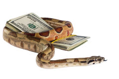 Dangerous money. Royalty Free Stock Images
