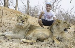 Dangerous Pose with Lion and Lioness. In a National Park in Victoria Falls, Zimbabwe Stock Image