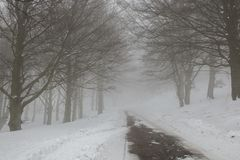Dangerous road with limited visibility caused by fog. Monte Cucco, Umbria Stock Image