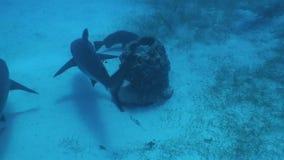 Dangerous Shark Underwater Video Cuba Caribbean Sea stock video