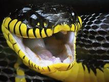 Dangerous Snakes stock images