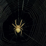 Dangerous spider web background at night Stock Photo