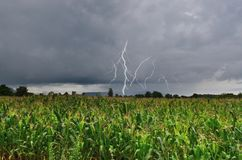 Dangerous thunder and rain storm over corn field