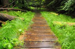 Dangerous wooden slippery path Stock Image