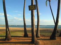 Dangers of Kauai beaches. The dangers of kauaian beaches - falling coconuts, warm sun, warm ocean and yellow sand Royalty Free Stock Image