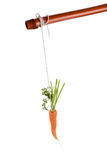 Dangling carrot Stock Photography