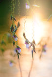 Dangling flower heads in the evening sun against water Stock Photography