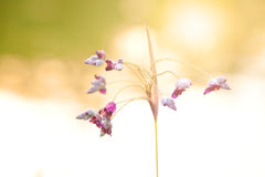 Dangling flower heads in the evening sun Royalty Free Stock Photography