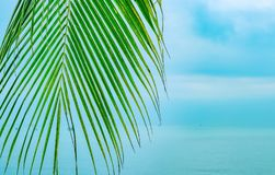 Dangling palm branch royalty free stock photography