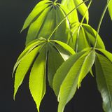 Dangling plant leaves. Close up of dangling plant leaves Royalty Free Stock Photo