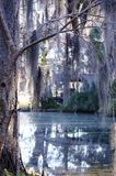 Dangling spanish moss from a tree over a swamp stock photography