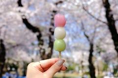 Dango di Hanami durante la stagione di Sakura-osservazione al parco di Asukayama, Tokyo fotografia stock