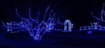 Daniel Stowe Botanical - Kerstmis 8 Stock Afbeeldingen
