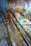 Danish autumn Stock Photo